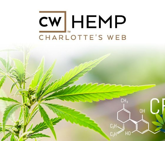 Walking Down Memory Lane: Interesting Charlotte's Web CBD Product Facts