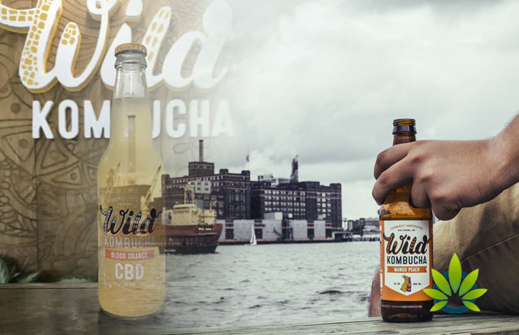 Wild-Kombucha-Debuts-New-Blood-Orange-CBD-Drink-for-Consumers-in-MD-PA-and-DC