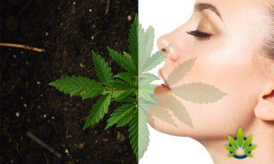 jennifer-lopez-cannabis-cbd-skincare