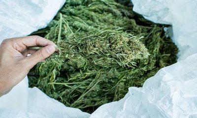 square-payments-cannabis-cbd
