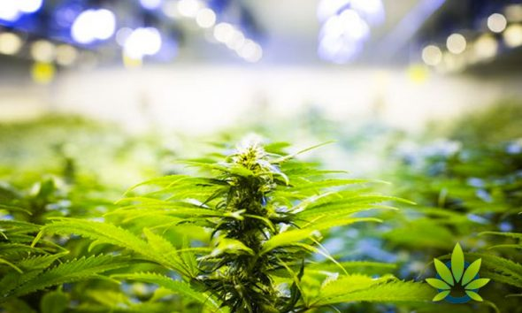 Congressional Justice Reform Resolution Calls for Legalizing Marijuana and Record Expungement