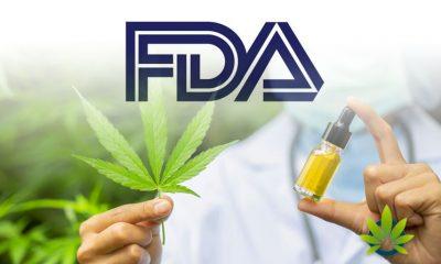 FDA Gives Approval for Human Drug Trial on Effectiveness of Marijuana-Based Medicine