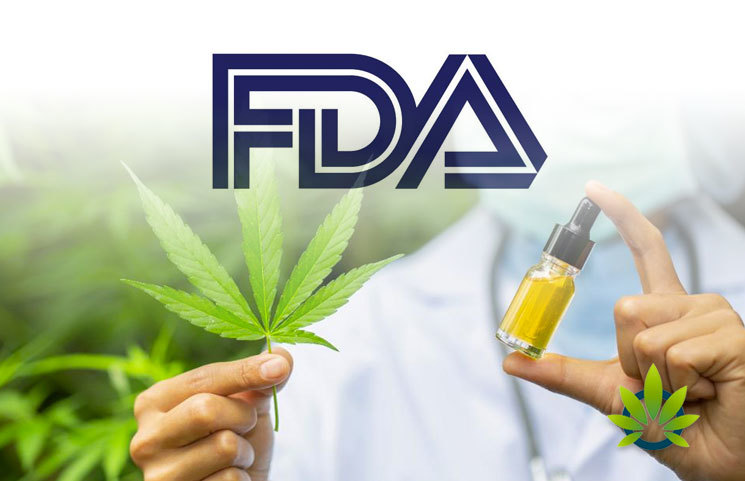 FDA Gives Approval for Human Drug Trial on Effectiveness of Marijuana-Based Medicine