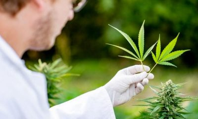 Malta to Make as First in Offering High-Grade Medical Cannabis to Europe