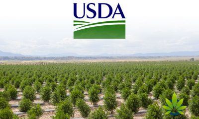 USDA Received Five Recommended Changes for the Newly Proposed Hemp Regulations