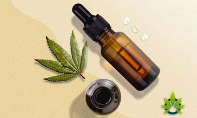 What Happens to Most THC and CBD Oil in the Body?