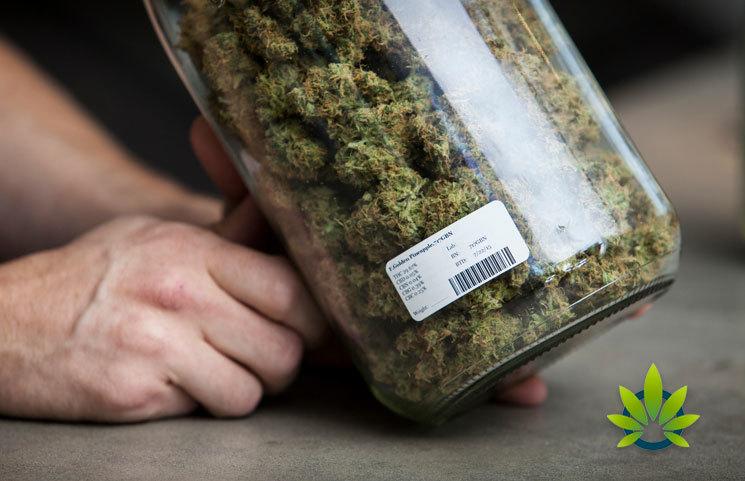 New Zealand Draft Bill Includes Marijuana Provisions