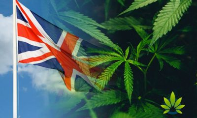 The Push for Marijuana Reform and Decriminalization in the UK is On