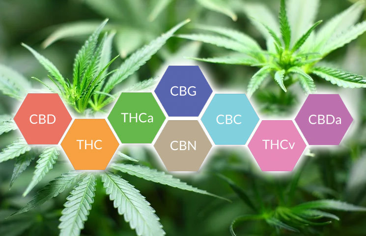 Are Cannabinoid Isolates the Next Wave to Unfold in the Cannabis Green Rush Era?