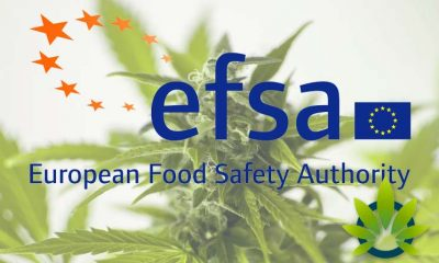 Europe's EFSA Issues Stark Safety Warning on Hemp CBD and THC Human Exposure Levels