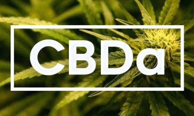Cannabidiolic Acid (CBDA): A Beneficial Guide to this Cannabinoid Compound