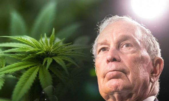 Presidential Candidate Mike Bloomberg Wants Cannabis Decriminalization in His Criminal Justice Reform Plan