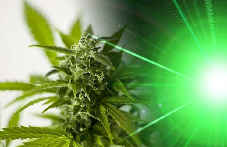 Raman Spectrometer (RS) Laser Device Helps Distinguish Hemp from Marijuana Plants