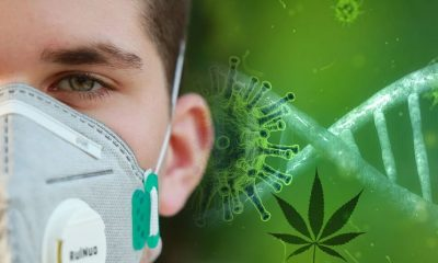 Despite Coronavirus Pandemic, Many New CBD-infused Products Launch