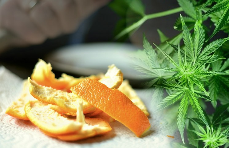 Orange Peel CBD? Japan's Hiro International Details Orange Peel-Derived CBD Oil