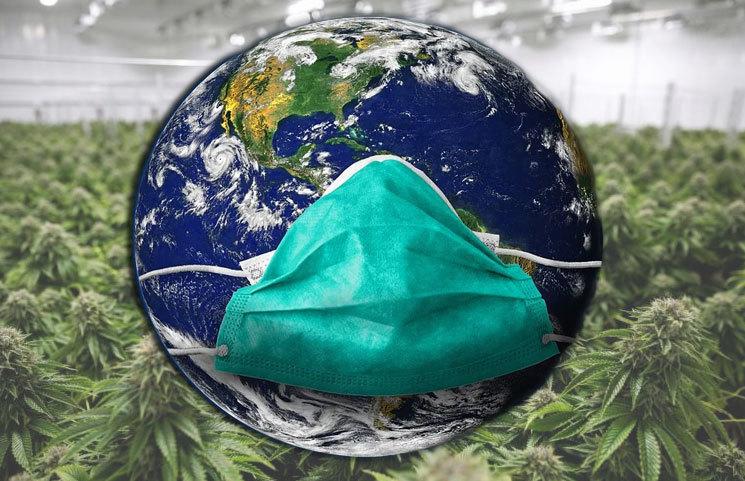 COVID-19 Pandemic Positively Pushes CBD Sales to Greener Pastures