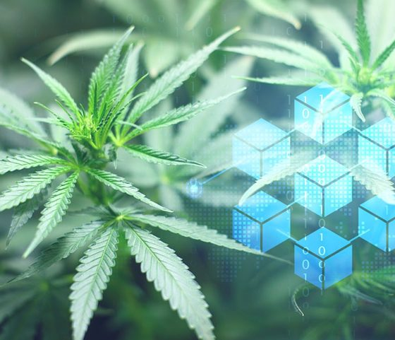 Could Blockchain Technology Make CBD Products Easier to Vet via CanCheck.org?