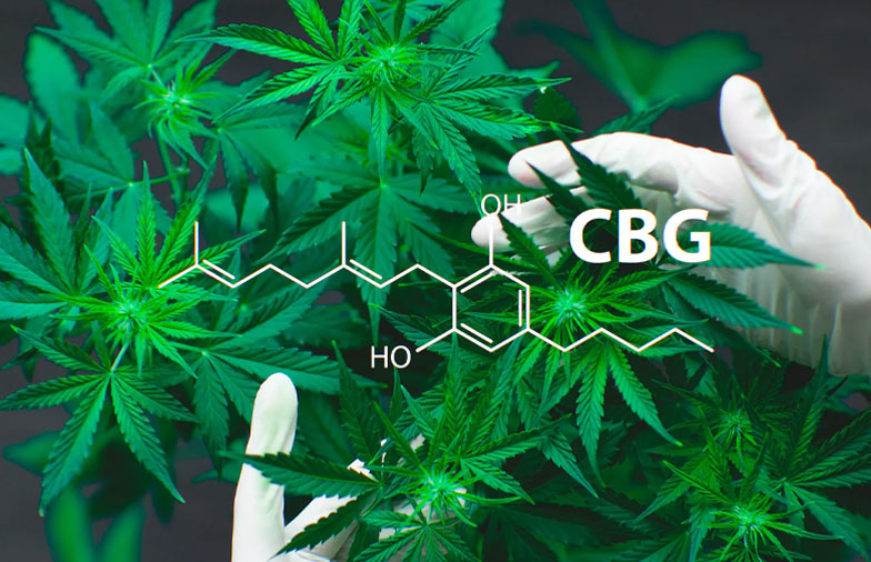 Could-CBG-Replace-CBD-Sooner-Rather-than-Later