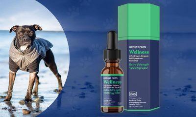 Honest Paws CBD Oil for Dogs: Organic Full-Spectrum Hemp Oil