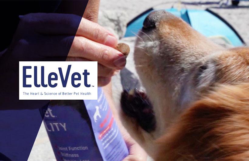 ElleVet Sciences Shares CBD+CBDA Oil On Dogs Study Results